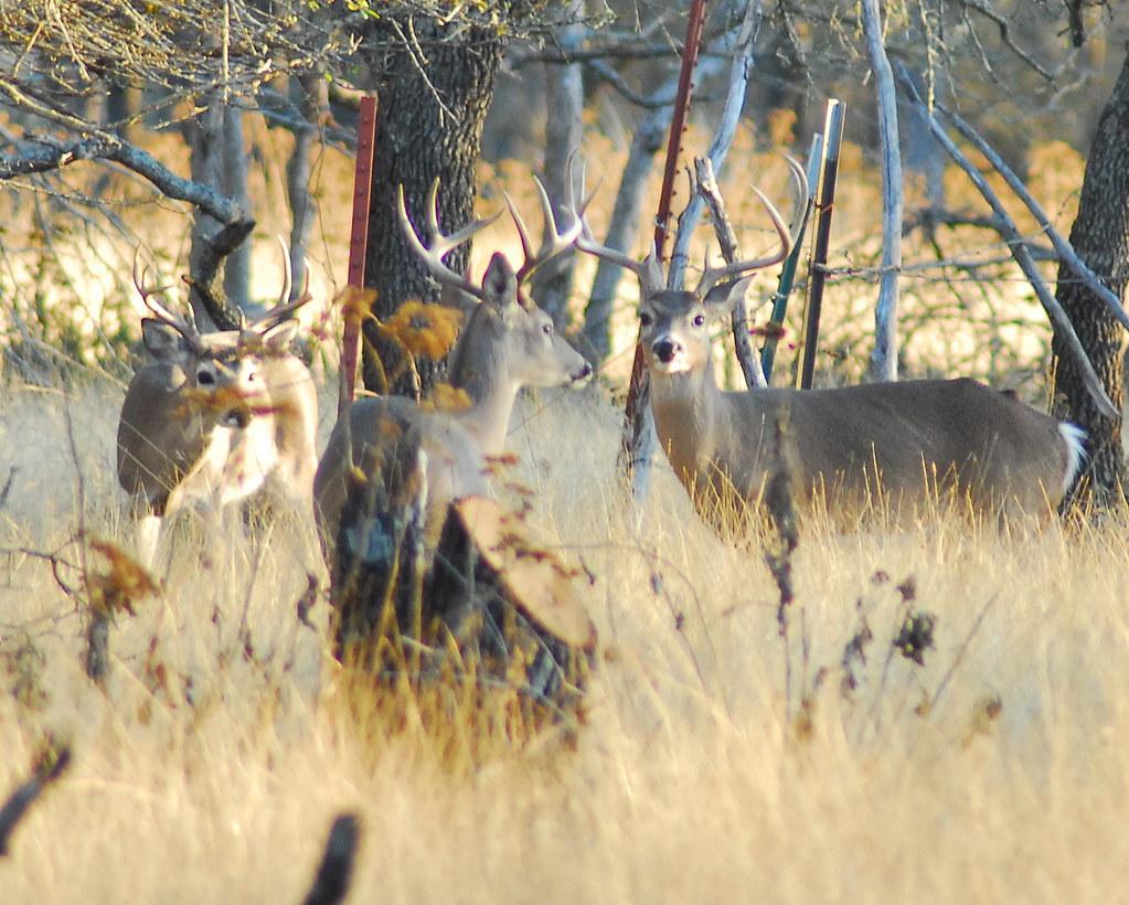 captured beautiful Deer at noon