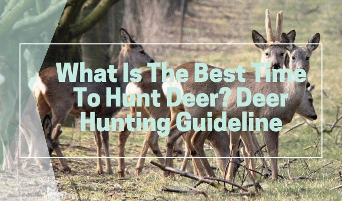 Best time to hunt deer